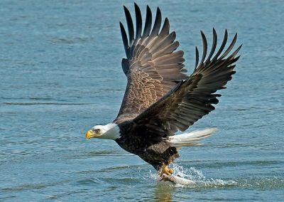wildlife-on-lake-jocassee-sc